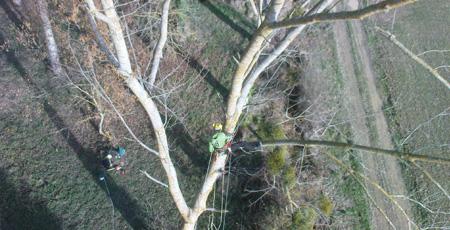 Vue aérienne d'un élagueur dans un arbre