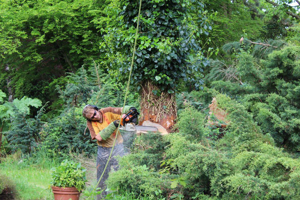 Élagueur qui tronçonne le tronc d'un arbre
