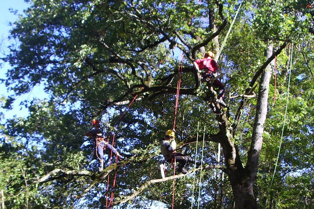Trois élagueurs qui travaillent en suspension dans un arbre