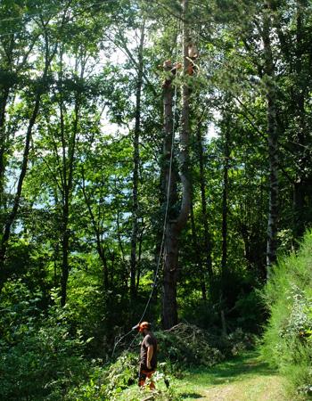 Photo en forêt lors d'un chantier avec des élagueurs au travail